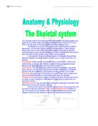 health  fitness essay  alevel physical education sport  skeletal systems