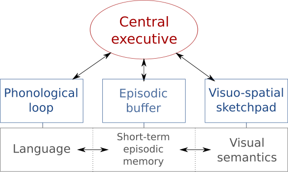 The Working Memory Model Was Proposed By Two Men Called Alan