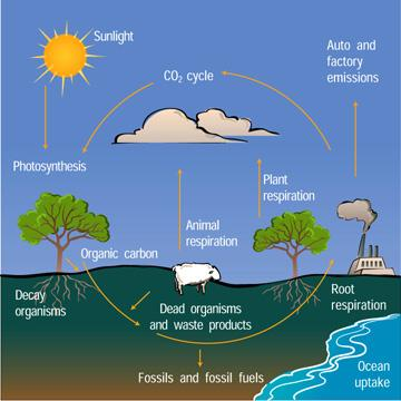the carbon cycle a level science marked by teachers com  is accumulating mainly due to the effects of deforestation coupled human activity many methods have been tried and tested like renewable energy