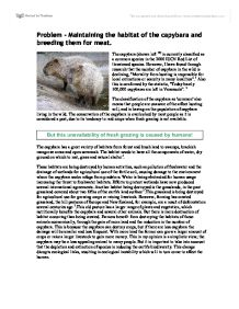capybara essay The writing capybara high, medium and low style so i know what you're thinking how on earth could writing have a height or even a style.