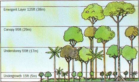 What and where is the rainforest ecosystem? - GCSE Geography ...
