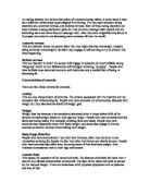 Male Reproductive System Worksheet and Key