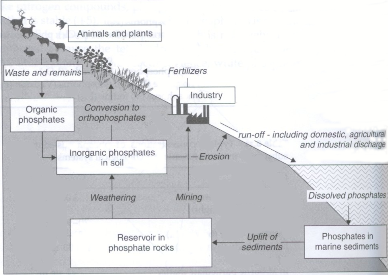 Detailed essay on biogeochemical cycles activity   Garage Marked by Teachers